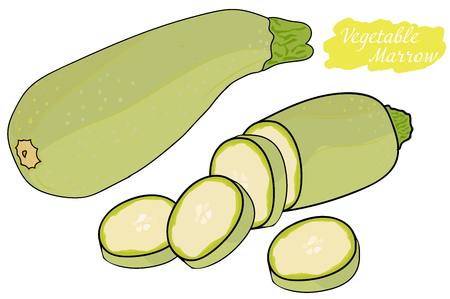 Zucchini. a whole zucchini, and pieces of sliced zucchini. food for vegetarians. vector illustration. Zdjęcie Seryjne - 76042665