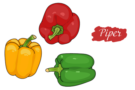 Pepper green, red, yellow from different angles. great for menu. useful vegetables. vegetarianism. Vector illustration with white background. the drawing hands. piper annuum