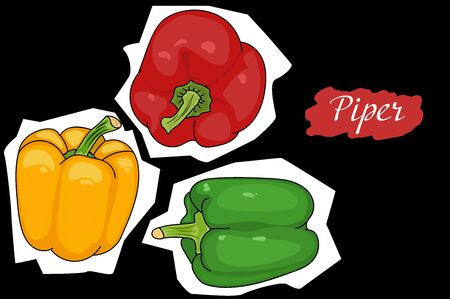 Pepper green, red, yellow from different angles. great for menu. useful vegetables. vegetarianism. Vector illustration with black background. the drawing hands.