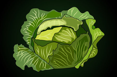 kale: a head of cabbage. vector illustration.black background. the food is vegetarian. Illustration