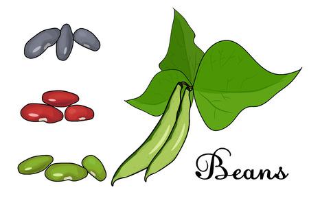 groene bonen. Witte achtergrond gesneden groenten. Vector illustratie van hoge kwaliteit.