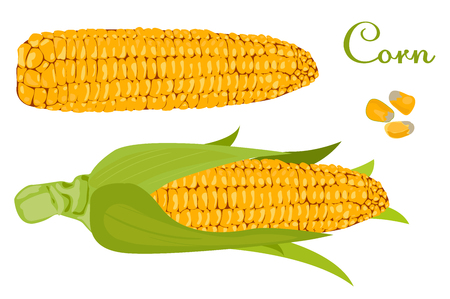 corn. ear of corn with leaves. white background cut vegetables. vector illustration of high quality. Ilustrace