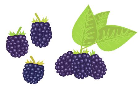 the black raspberry. Çizim