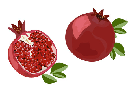 Pomegranate. Juicy ripe fruit in cross section. Color vector illustration. Illustration