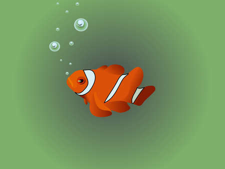 nemo: Orange and black tropical clown fish Illustration