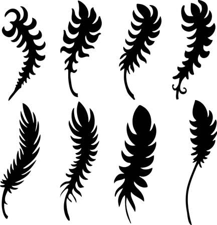 feather detailed illustration isolated on white Illustration