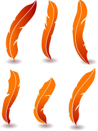 calligraphy pen: pluma ilustraci�n detallada aislada en blanco