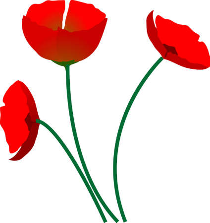 Poppy in spring with white background Illustration