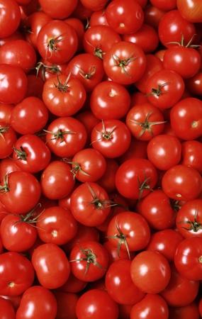 신선한 빨간 토마토와 배경
