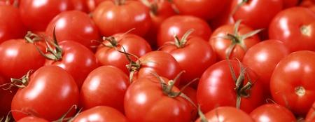 배경 위트 신선한 육즙 토마토