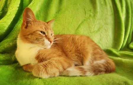coverlet: red cat lying on green coverlet