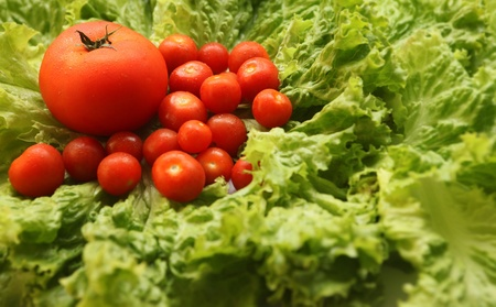 supremacy: horisontal shot of tomatoes and lettuce leaves Stock Photo