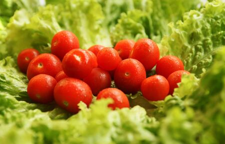 better living: little tomatoes on fresh leafs of salad