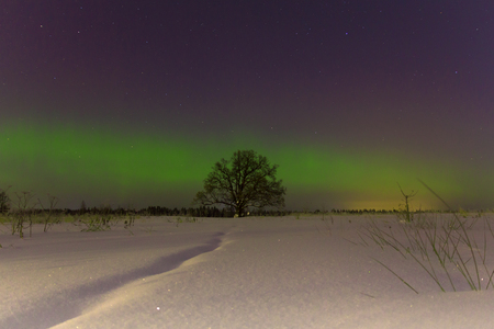 magnetic stones: the age-old lone oak on a background of the Northern Lights