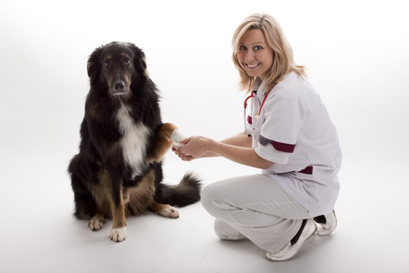 injure: veterinary with dog