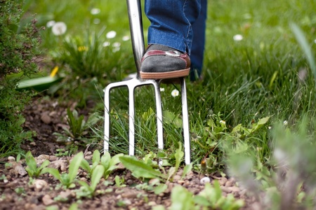 weeding: Foot of a pensioner on pitchfork in the garden