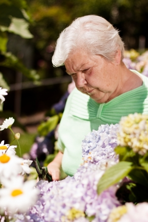 elderly woman with the flower garden shears cut Stock Photo - 14407516
