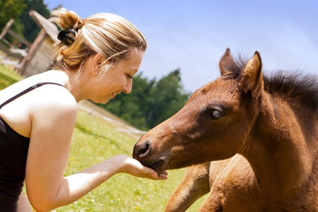 horse blonde: pretty woman is feeding an filly