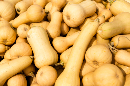 background of butternut pumpkins photo