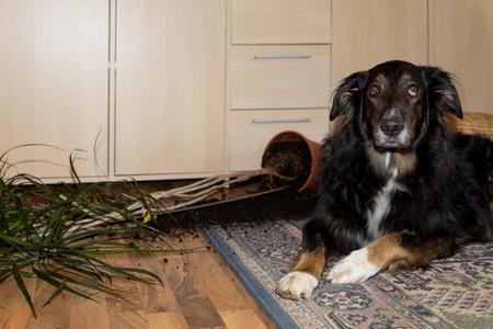 big dog has done something Stock Photo