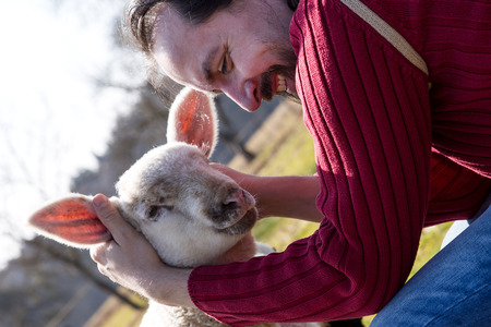 teases: Man teases a little lamb and have fun