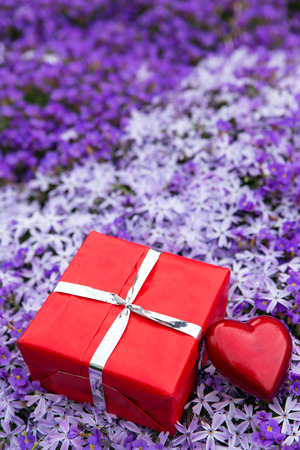 moos: a sea of purple blooms with a red gift and heart