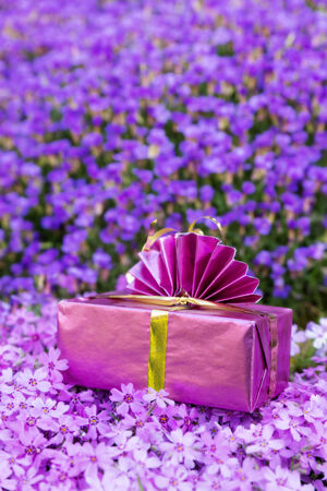 atop: a pink present atop a sea of violett flowers Stock Photo