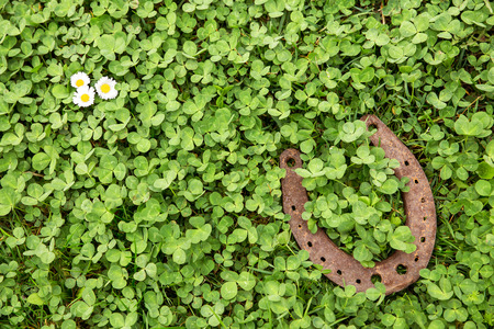 a Lucky charm on clover as a background Stock Photo