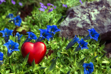 declaration of love: a red heart on blue bavarian gentians