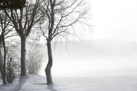 fog white: few icy trees in the snow with nascen fog