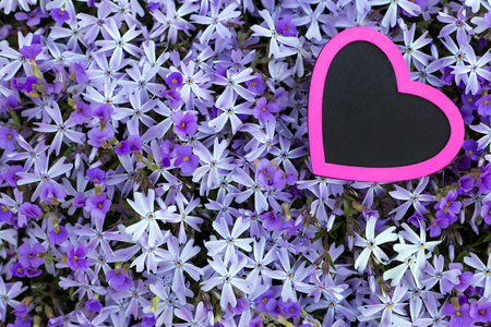 moos: a pink heart with a violett flower background