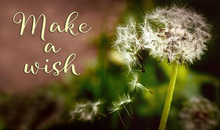 Closeup from a dandelion with Text make a wish, concept gifts and valentine´s day