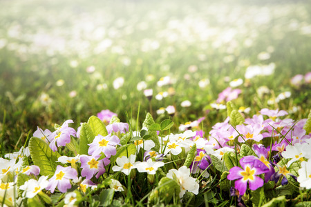 campo de flores: prado de primavera en el sol, mucho copyspace Foto de archivo