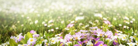 campo de flores: panorama colorido de la flor con mucho copyspace