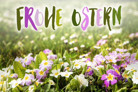 Ostern: colorful flower meadow with german words frohe Ostern, which means happy easter