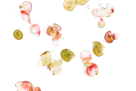 fruit background: a few grapes smashed on a pane, low angle shot, white background