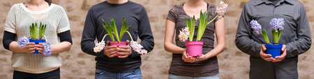 four people: four people are holding hyacinths, panorama shot, concept pretty office Stock Photo