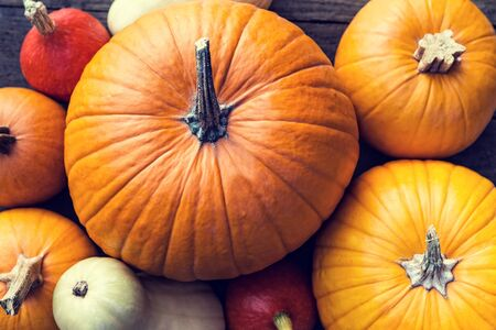 sorts: Flat lay, lots of different sorts of orange and yellow Pumpkins Stock Photo