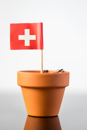upturn: plant pot with swiss flag, concept population increase or economic increase