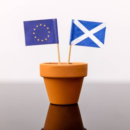 plant pot: plant pot with scottish and european flag, concept independence and increase, member of eu