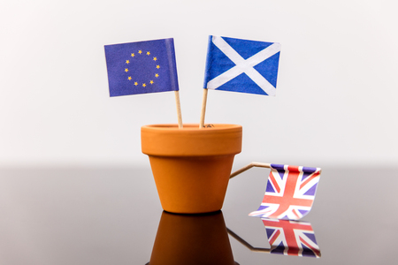 upturn: plant pot with scottish and european flag, concept independence and increase, member of eu, independence referendum