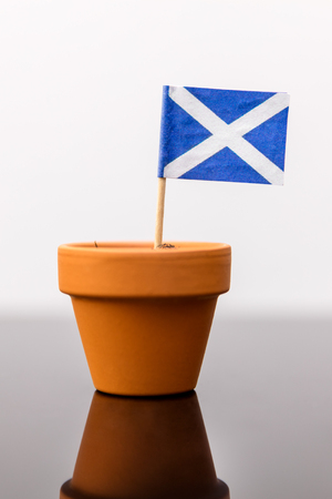 plant pot: plant pot with scottish flag, concept independence and increase
