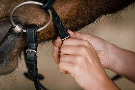 tack: woman fixing horse bridle with snaffle bit, closesup