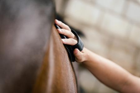 closeup, woman is currying a brown horse, equestrian farm