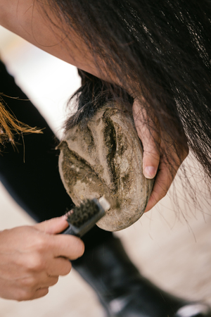 hoof: cleaning and picking of a horse hoof, details, veterinarian work