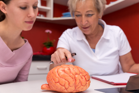 female doctor explains an sudent details of an brain with a plastic model Stock Photo