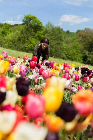 young woman on a fresh and colorful flower field with tulips Stock Photo
