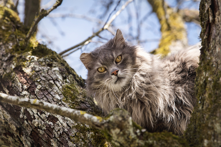 Sommer: Feral cat sitting on a tree, concept waiting for the fire department, rescue and help