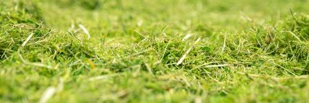 세부 정보가 담긴 파노라마, 녹색 이끼 및 잡초 초원 스톡 콘텐츠