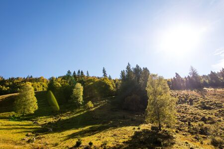 Black forest, trees and hills with sunshine, autumn season